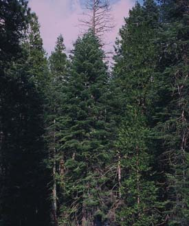 Photo of the Tree